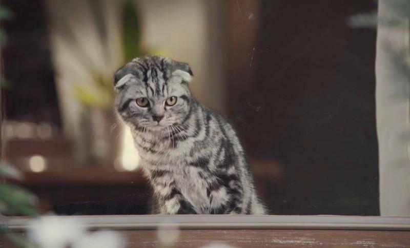 Finn.no (Katt)